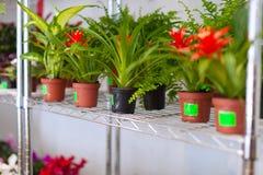 Prateleiras com as flores em uns potenciômetros Imagem de Stock