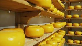 Prateleiras com círculos do queijo de exploração agrícola video estoque