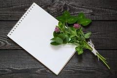 Pratense y cuaderno del Trifolium del trébol rojo de la planta medicinal Fotos de archivo libres de regalías
