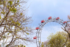 Prater Wheel, Vienna, Austria among spring green trees Stock Images