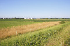 Prateria agricola della costa ovest Fotografia Stock