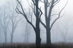 Prateria alta dell'erba in nebbia Immagini Stock