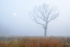 Prateria alta dell'erba in nebbia immagine stock libera da diritti