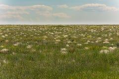 Prateria, coperta di stipa di fioritura La stagione della steppa in primavera Fotografie Stock