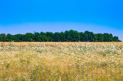 Prateria di Kansas Fotografia Stock Libera da Diritti