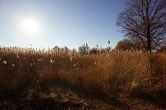 Prateria di Ojibway Tallgrass di caduta Fotografia Stock
