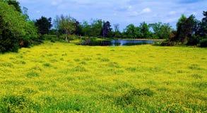 Prateria gialla Sundrops fotografie stock