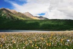 Prateria in pieno dei fiori, dell'alta montagna e del lago Cuopu Immagini Stock