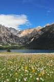 Prateria in pieno dei fiori, dell'alta montagna e del lago Cuopu Immagine Stock Libera da Diritti