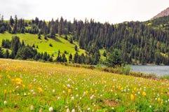 Prateria in pieno dei fiori, dell'alta montagna e del lago Cuopu Immagini Stock Libere da Diritti