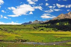 Prateria in pieno dei fiori, dell'alta montagna e del lago Cuopu Fotografie Stock