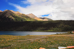 Prateria in pieno dei fiori, dell'alta montagna e del lago Cuopu Fotografia Stock