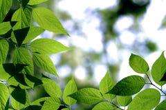 Prateria verde Fotografia Stock Libera da Diritti