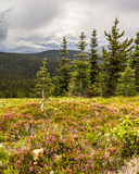 Prati alpini che equipaggiano paesaggio del Canada del parco di estate Fotografia Stock Libera da Diritti
