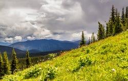 Prati alpini che equipaggiano paesaggio del Canada del parco di estate Fotografia Stock