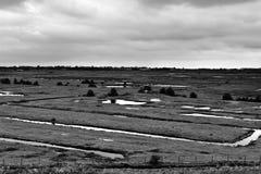 Prati costituiti dalle dighe in Olanda Fotografia Stock