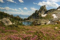 Prati del Lupine e lago di fioritura Amphitheater Immagini Stock Libere da Diritti
