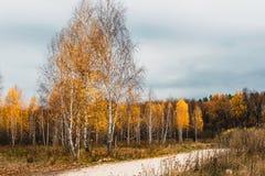 Prati del terreno alluvionale della zona della foresta-steppa fotografia stock