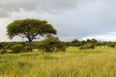 Prati della Tanzania Fotografia Stock Libera da Diritti
