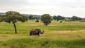 Prati della Tanzania Fotografie Stock