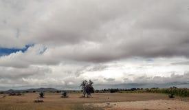 Prati della Tanzania Fotografia Stock