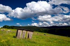 Prati di estate in montagne Immagini Stock Libere da Diritti