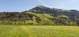 Prati di fioritura in Svizzera Fotografie Stock Libere da Diritti