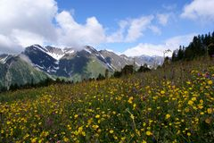 Prati di Fowers nelle alte montagne Immagine Stock