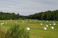 Prati di Savonia nordico in Finlandia orientale fotografia stock