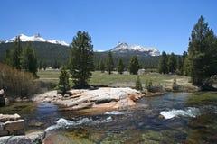 Prati di Tuolumne, passaggio di Tioga, Yosemite Immagine Stock