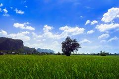 Prati e colline del Laos Immagine Stock