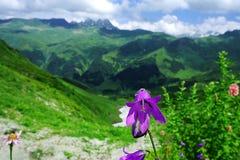 Prati e fiori alpini della montagna su un fondo delle montagne distanti in una bella nuvola Immagini Stock