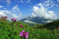 Prati e fiori alpini della montagna su un fondo delle montagne distanti in una bella nuvola Fotografie Stock Libere da Diritti