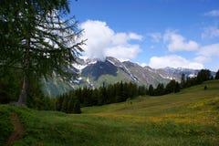 Prati ed alpi alpini di Oetztal Immagine Stock