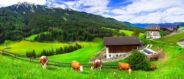 Prati fertili verdi - cow& x27; pascolo di s, paesaggio alpino Dolomia Mo Fotografie Stock