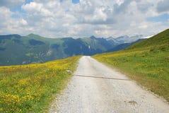 Prati nelle alpi di estate Fotografia Stock
