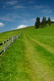 Prati svizzeri Immagine Stock