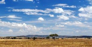 Prati in Tanzania Fotografia Stock Libera da Diritti