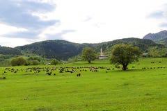 Prati verdi, cavalli, mucche, pecore Fotografia Stock
