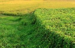 Prati verdi e campo di verdure Fotografia Stock Libera da Diritti