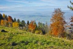 Prati verdi sopra il lago Lucerna, alpi, Svizzera Immagini Stock