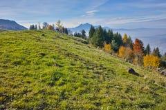 Prati verdi sopra il lago Lucerna, alpi, Svizzera Immagine Stock Libera da Diritti