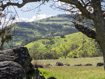 Prati verdi sulle montagne con le querce Immagini Stock Libere da Diritti