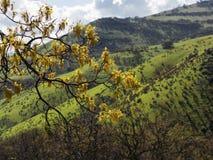 Prati verdi sulle montagne con le querce Fotografie Stock