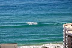 Praticando il surfing con l'idillio selvaggio di mattina dei delfini Immagini Stock
