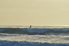 Praticare il surfing della spiaggia di La Jolla Fotografia Stock Libera da Diritti