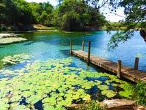 Pratinha gospodarstwo rolne przy Chapada Diamantina, Bahia, Brazylia zdjęcie stock