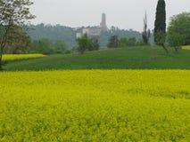 Prato с рапсом с церковью и колокольней стоковое фото rf