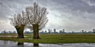 Prato al fiume Fotografie Stock