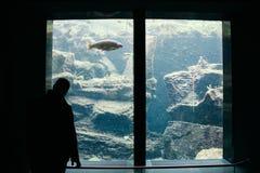 Prato allo Stelvio, Italy - 03 24 2013: Views and exhibits of the Aqua Prad. The visitor center aquaprad royalty free stock images